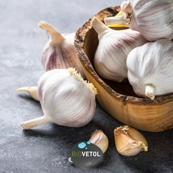 L'AIL  L'ail est utilisé depuis longtemps comme plante médicinale.  98% des défenses immunitaires sont dans le système digestif. Une action préventive régulière à base d'actifs naturels (végétaux et minéraux) permet de :  🌱 Agir sur les parasites intestinaux 🌱 Maintenir un fonctionnement normal de l'intestin 🌱 Stimuler les défenses immunitaires 🌱 Maintenir une fibre intestinale saine  L'ail est un puissant antimicrobien et antibiotique.  Il est efficace dans la lutte contre diverses formes d'infection interne ou externe, tels que les bactéries, les virus ou les champignons, y compris les parasites (par exemple les vers plats) et les organismes protozoaires (giardia, par exemple).  Vous retrouverez ainsi l'ail dans la poudre et les comprimés bien-être intestinal  Sur l'étiquette, son nom est Ail Bio ou Allivum sativum  #moncompagnonbiovetol #petcare #organic #Bio #ecocert #actifsdoriginevegetale #fabriqueenfrance #originefrance #fabriqueenfrance #madeinfrance #chien #chat #petcare #instadog #instacat #pet #dog #cat #animallover #soin #naturalproducts #ail #Allivumsativum