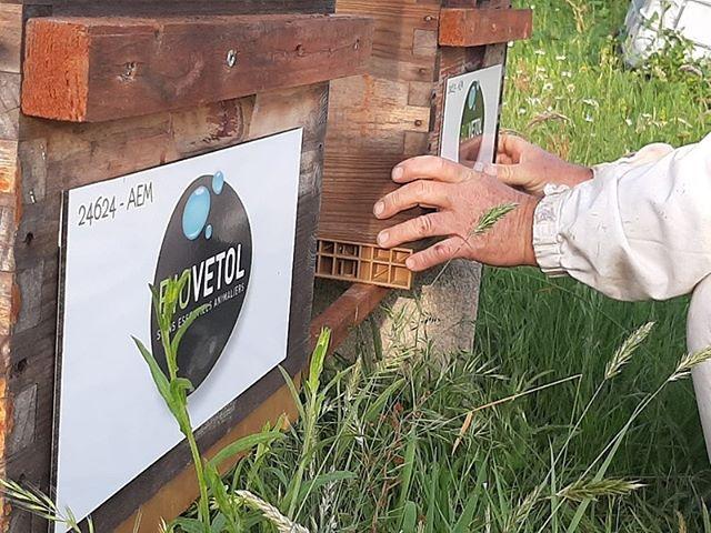 🐝😁🌱Aujourd'hui, c'est la journée mondiale des abeilles !  Comme vous le savez, nous parrainons des ruches. En achetant les produits BIOVETOL, vous participez à la sauvegarde des abeilles et au développement des colonies.  Aujourd'hui, nous vous invitons à découvrir les ruches et les apiculteurs qui œuvrent avec un toit pour les abeilles 🐝  https://www.untoitpourlesabeilles.fr/entreprises/164-cap-finity.html  #untoitpourlesabeilles #abeille #bee #biovetol #moncompagnonbiovetol #petcare #organic #Bio #ecocert #actifsdoriginevegetale #fabriqueenfrance #originefrance #chien #chat #bassecour #petcare #madeinfrance #instadog #instacat #pet #dog #cat #animallover #soin #naturalproducts #abeilles #bees