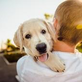 """🐾 Ne désinfectez pas les pattes de vos chiens après la promenade ! 🐾  Fake News : """"Pour éviter la propagation du coronavirus, certains conseillent de désinfecter les pattes de leurs chiens après la promenade."""" Une très mauvaise idée !  Avec les produits suivants, vous risquez les brûlures aux pattes où à la gueule des animaux ou les comas éthyliques : ❌ Gel Hydroalcoolique ❌ Javel ❌ Produits corrosifs ❌ Lingettes inadaptées  Ne croyez-vous pas que les vétérinaires ont d'autres urgences à gérer ? 🤔  Si vraiment la situation vous angoisse et que nettoyer les pattes de votre chien après sa promenade vous rassure, privilégiez ✔️ eau douce et savon pour chien ✔️ Ne laissez pas l'animal vous lécher le visage* ✔️ Lavez-vous les mains avant et après avoir caressé un animal* *recommandations ANSES  Autre idée à oublier : le toilettage maison excepté le shampooing ! Vous éviterez ainsi de blesser votre animal. Comme pour vous, attendez la fin du confinement 😉😁💇💇🏼♀️ #moncompagnonbiovetol #petcare #organic #Bio #ecocert #actifsdoriginevegetale #fabriqueenfrance #originefrance #fabriqueenfrance #madeinfrance #chien #chat #petcare #instadog #instacat #pet #dog #cat #animallover #soin #naturalproducts #covid19 #coronavirus"""
