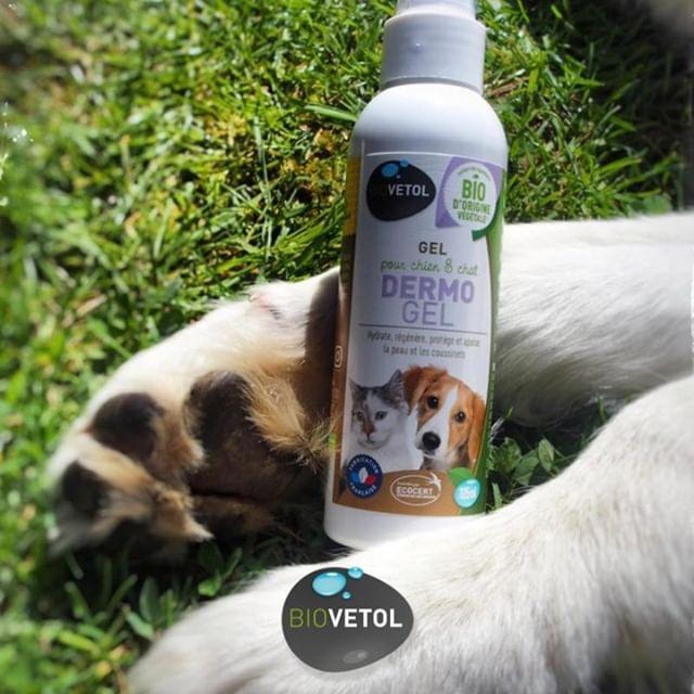 LE DERMO'GEL Entre les longues balades, les courses, le goudron chaud l'été, les graviers,  etc., les coussinets de votre chien sont souvent mis à rude épreuve ! Puisque les pieds de votre compagnon sont fragiles, il est important de les protéger. Ceux-ci sont fissurés, rugueux, avec des crevasses, voire irrités.  Caractéristiques du Gel Dermo'gel : 🌱Hydrate, régénère et protège la peau 🌱Apaise les légères irritations de la peau 🌱Apaise les micro-lésions de la peau (suite au grattage) 🌱Soulage les coussinets abîmés  Véritable 3 en 1 👉 Réparateur 👉 Anti-Bactérien 👉 Antiseptique  Alors, il y a quoi dedans ? 🤔 🌟 Mimosa tenuiflora (Tépezcohuite): Régénère le filtre hydro-lipidique (il cicatrise) 🌟 Propolis : antibiotique naturel 🌟 Calendula : a des propriétés adoucissantes, assouplissantes, apaisantes 🌟 Clou de girofle : Antiseptique et son odeur repousse les insectes et empêche votre animal de se lécher  Mode d'emploi: Appliquer directement sur la zone irritée à raison de 3 à 4 applications par jour, pendant 3 à 5 jours. Masser légèrement pour étaler le produit.  Besoin d'un avis? Demandez à @baloowolf_ @moonthewhippet @les.ptits.pouillons @paco_gold_retriever @jazz_and_pearly 📸 @paco_gold_retriever