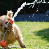 Alerte Canicule : Les animaux craignent la chaleur et la canicule peut être dangereuse pour eux. Protégez-les ! 🐾🌱 Gardez des pièces de votre logement au frais, aérez votre logement à la fraîche. 🐾🌱 Faites-leur boire de l'eau. Comme les humains, les animaux ont besoin de s'hydrater davantage lorsqu'il fait chaud. 🐾🌱 Ne laissez jamais votre chien dans votre véhicule, même avec une fenêtre entrouverte. 🐾🌱 Adaptez les sorties. Évitez les promenades en pleine chaleur. Privilégiez les sorties le matin et le soir, où l'air est plus frais, et marchez à l'ombre. Pensez à ses coussinets sur le bitume 🐾🌱 Il ne faut pas tondre son animal en été. Le poil protège des UV, de la déshydratation et permet la thermorégulation 🐾🌱 Ne laissez pas votre compagnon courir dans l'eau. Mouillez-le un peu avant la baignade afin déviter l'hydrocution  www.biovetol.fr #moncompagnonbiovetol #biovetol #petcare #organic #environnement #ecocert #actifsdoriginevegetale #fabriqueenfrance #originefrance #instadog #instacat #pet #dog #cat #animallover #soin #care #animals #madeinfrance #naturalproduct