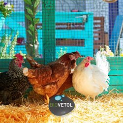 On s'intéresse à la basse-cour 🐓  Les poules peuvent être attaquées par de nombreux parasites : puces, acariens, poux, vers…  Des ennemis petits mais potentiellement dangereux pour la santé de vos poules. Avec les beaux jours, c'est donc le bon moment pour lui appliquer un antiparasitaire !  Découvrez notre gamme, contrôlée et labellisée par ECOCERT, sur Biovetol.fr   Des solutions avecingrédients d'origine végétale contre les poux des poules, le maintien d'un lieu de vie sain et le bien-être des animaux.  L'avez-vous testé ?  #moncompagnonbiovetol #biovetol #petcare #organic #Bio #ecocert #actifsdoriginevegetale #fabriqueenfrance #originefrance #fabriqueenfrance #madeinfrance #chien #chat #petcare #instadog #instacat #pet #dog #cat #animallover #soin #naturalproducts #bassecour #poule #poulailler