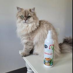 @2miss-british a décidé de se rapprocher du canapé de la famille 😬🤦🏼♀️  Bon réflexe : Utiliser le Spray Répulsif !  Cette lotion, respectueuse de l'animal et de l'environnement, protège vos lieux et objets (tissus, meubles) contre leurs actions (griffures, morsures) tout en diffusant une odeur agréable dans l'habitat.  Le spray BIOVETOL protège les endroits traités en dégageant une odeur que les animaux détestent sans agresser leur odorat.  Sans additif chimique c'est un complexe d'huiles essentielles naturelles. 🌱Citronnelle de Java 🌱Menthe 🌱Eucalyptus  #biovetol #moncompagnonbiovetol #petcare #organic #Bio #ecocert #actifsdoriginevegetale #fabriqueenfrance #originefrance #chien #chat #petcare #madeinfrance #instadog #instacat #pet #dog #cat #animallover #soin #naturalproducts