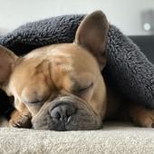Comme une envie de rester au chaud et de faire la sieste 😆🐾🌱 #biovetol #moncompagnonbiovetol #petcare #organic #Bio #ecocert #actifsdoriginevegetale #fabriqueenfrance #originefrance #chien #chat #petcare #madeinfrance #instadog #instacat #pet #dog #cat #animallover #soin #naturalproducts
