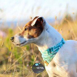 🐶🐾Journée Internationale du chien 🐾🐶  Cette journée internationale insiste surtout sur le lien qui unît depuis des millénaires les hommes et les chiens partout dans le monde.  Pour cette journée spéciale, nous offrons, à l'un d'entre vous, 3 produits de votre choix*.   Pour gagner: 🐶 Avoir un chien (ou plusieurs) 🐶 Habiter en France métropolitaine 🐶 Commentez ce post et invitez deux amis 🐶 Être abonné au compte @biovetol   Tirage au sort organisé vendredi 28/08.  *au format standard et hors trousse de voyages et Collection  📸 @geko_jelly_bali  #dogday #internationaldogday #moncompagnonbiovetol #biovetol #petcare #organic #environnement #ecocert #actifsdoriginevegetale #fabriqueenfrance #originefrance #instadog #pet #dog #animallover #soin #care #animals #madeinfrance #naturalproduct
